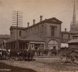 Cattle at Jarvis Street and Front Street near St. Lawrence Market, circa 1885. Source: City of Toronto Archives, fonds 1478, item 21.